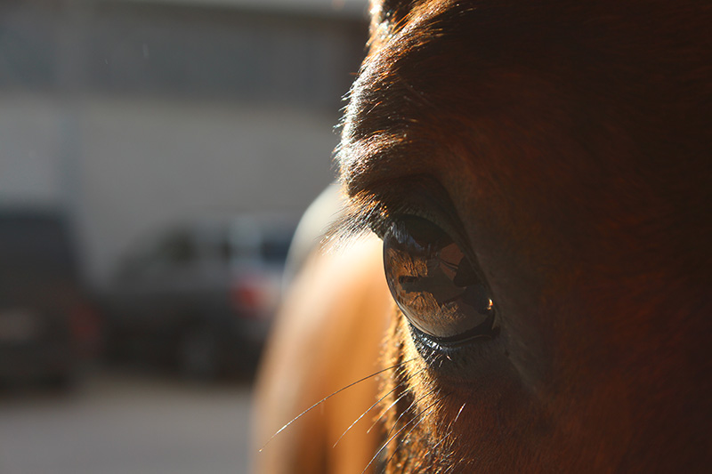 pferde-stoffwechselkrankheiten