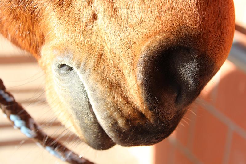 Gesundheitsmanagement für Pferde und markenunabhängige Beratung