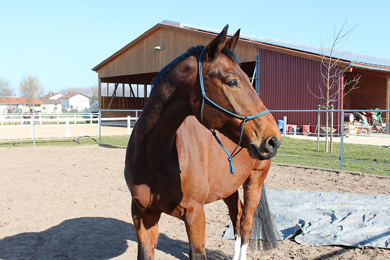Gesundheitsmanagement für Pferde